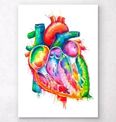 Anatomical heart art - Watercolor splash