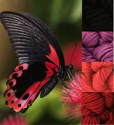 My Color Palette:  Butterfly  Lucci Cotton Tape Yarn in:  Black, Fuschia Red, Cerise & Gallant Red
