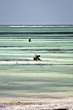 Zanzibar   --- this would make a cool stripe print.