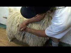Guide To Purchasing Angora Goats For Mohair Production | #4 Farm Mohair For Profit - YouTube