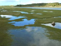 O que são estuários, características das plantas e animais que lá vivem - http://www.comofazer.org/ambiente/sao-estuarios-caracteristicas-das-plantas-animais-la-vivem/