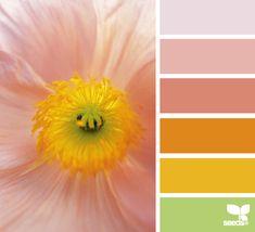flora glow Color Palette by Design Seeds Design Seeds, Hue Color, Color Palate, Colour Schemes, Color Combos, Colour Palettes, Color Concept, Color Studies, Colour Board