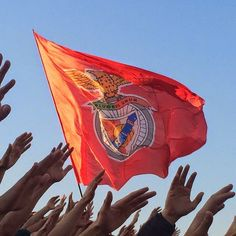 Big Love, First Love, Benfica Wallpaper, No Name, Football Fans, World, Boys, Painting, Club