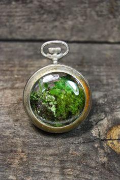 pocket watch - the slug and the squirrel The Slug, Cottage Gardens, Terrariums, Squirrel, Pocket Watch, Jewelery, Nova, Landscapes, Creativity