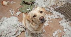 Versteckte Kamera: Das machen Tiere allein Zuhause #News #Unterhaltung