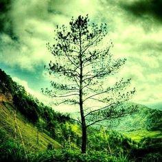 Tree.?