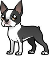 All About Fun Boston Terriers Health Brindle Boston Terrier, Boston Terrier Art, Cute Puppies, Cute Dogs, Dog Crafts, Animal Drawings, Puppy Drawings, Easy Drawings, Cartoon Dog