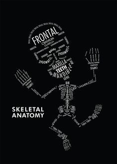 Anatomy and Physiology skeleton infographic... This would have been gear for studying two years ago..