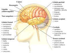 cerebros hermosos - Buscar con Google