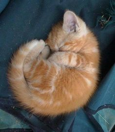 when you have no one to cuddle with, you curl up by yourself