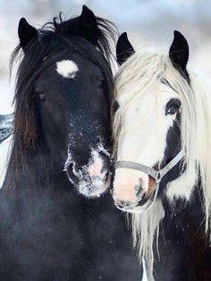 (82) I Love Horses - Photos