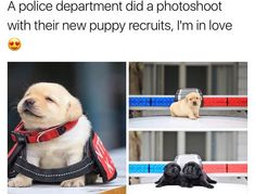 21 Wholesome Memes For a Wonderful Week : Funny Dogs Cute Animal Memes, Cute Funny Animals, Funny Animal Pictures, Funny Cute, Funny Dogs, Hilarious, Cute Puppies, Cute Dogs, Lab Puppies