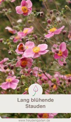 Die 57 Besten Bilder Von Pflanzen Backyard Patio Balcony Garden