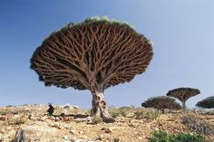 World's Strangest Places - Mysterious Island of Socotra Indian Ocean { Off the African Coast }