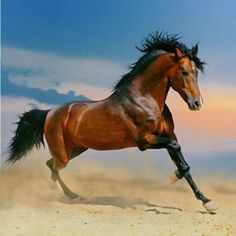 Arabians are know fro their beauty, grace, and stamina. These are fun, energetic horses - so be prepared to spend lots of time with your Arabian if this is what you buy.