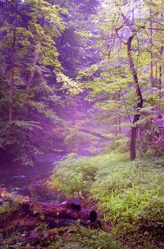 The Wonder of Nature, photo by John Stuart Webbstock