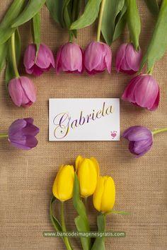 Tarjetas con Tulipanes y Nombres de Personas para Compartir   Banco de Imágenes Gratis (shared via SlingPic)