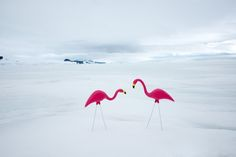 Chilling Photos of Antarctica Juxtaposed with Warm Weather Objects - My Modern Met