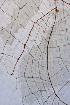 Maureen Ciaccio, World Leaf: Arctic Circle/i, detail