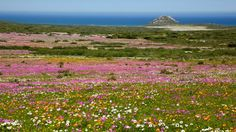 Holiday Guide   6 Favourite Cape trails you have to visit this flower season