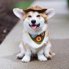 Love Cute Dogs #cutedogs