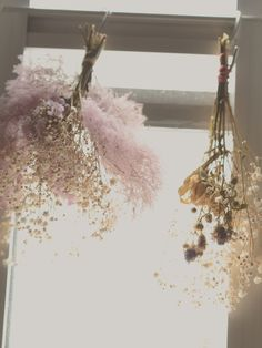 Dried Flowers ☼