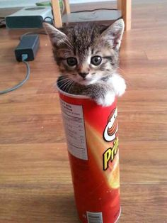 ... a cat having an existential crisis in a Pringles can. | 25 Animal Pictures That Will Restore Your Faith In Animals