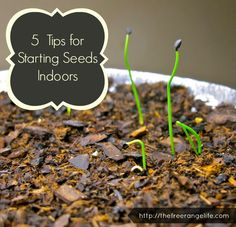 5 Tips for Starting Seeds Indoors