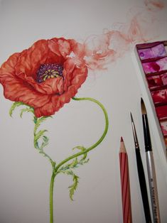 Eunike's generosity in sharing painting tips in Motzter Watercolor Flowers, Watercolor Paintings, Watercolors, Watercolor Techniques, Japanese Watercolor, Nature Illustration, Color Stories, Red Poppies, Painting Tips