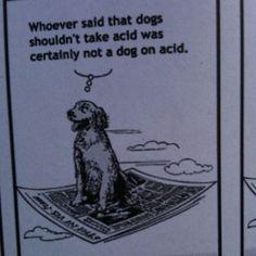 Dog on acid :3