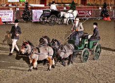 pony team carriage driving Miniature Horse Barn, Miniature Ponies, Tiny Horses, Show Horses, Mini Horse Cart, Animals Beautiful, Cute Animals, Shetland Ponies, Mini Donkey