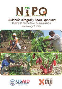 NIPO  Nutrición integral y poda oportuna en el cacao.