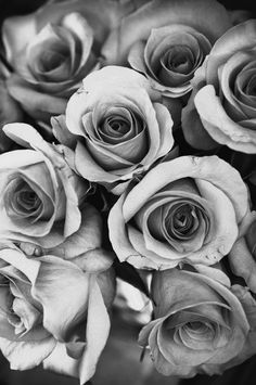 Picture of Natural Rose background. monochrome stock photo, images and stock photography. Black And White Roses, Black N White Images, Black And Grey, Black And White Aesthetic, Aesthetic Colors, Aesthetic Collage, Abstract Canvas, Oil Painting On Canvas, Color Splash