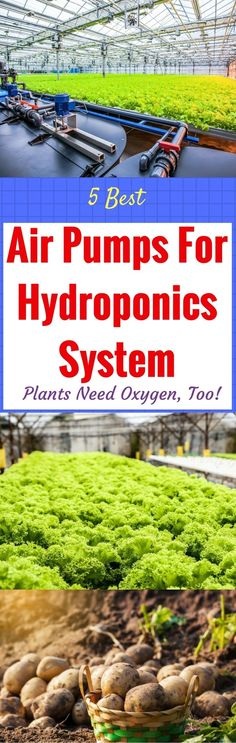 Learn the importance of having an air pump in hydroponic gardening and learn how it works in order to keep your plants healthy and prevent oxygen deficiency. https://gardenambition.com/best-air-pumps-for-hydroponics/