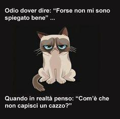 Grumpy Cat Illustration iPhone 7 Plus Case Grumpy Cat Quotes, Grumpy Cat Cartoon, Grumpy Cat Meme, Grumpy Kitty, Cat Jokes, Feelings Words, S5 Mini, Funny Pins, Funny Stuff