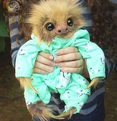In case of bad day: Hehe's a picture of a baby sloth in a pyjama : ©Lee cross Happy Animals, Cute Funny Animals, Cute Baby Animals, Animals And Pets, Wild Animals, Baby Sloth Pictures, Animal Pictures, My Spirit Animal, My Animal