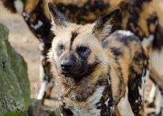 Lista de Animales en Peligro de Extinción Las Causas y Los Efectos