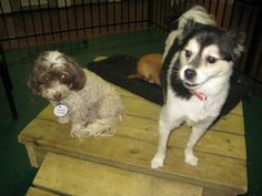 Jet pet Resorts, Richmond,BC based doggie day care center offers Best Dog Walking and Boarding Facilities at very reasonable prices. They are also providing dog grooming  and overnight boarding services.