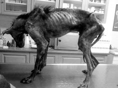 Dog Given A Home To Die In ... But He Decides To Live Instead