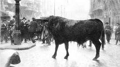 Madrid, 1928, cuando un toro bravo desmandado  se paseó por las calles de Madrid. En la foto aparece en la Gran Vía junto a la calle Montera, delante del Café del Norte http://www.abc.es/20100331/madrid-madrid/toro-sembro-panico-20100331.html