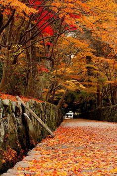 The approach to Kosho-ji temple, Kyoto, Japan