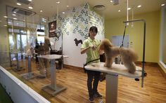 Japan opens first elderly dog retirement home
