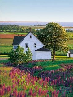 Prince Edward Island - After we read Anne of Green Gables we will go here! Perfect place for our goat farm!