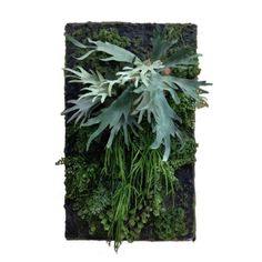 Garden Staghorn Fern Living Wall – Avanna Home Fashions
