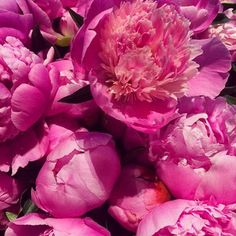 Full blown peonies. NYC flower market. #details