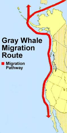 Gray Whale Migration Route Map
