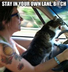 Stay in your own lane. 28 Images With Hilarious Captions - Gallery