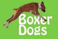 My fur baby is my boxer, Dexter. This forum has been invaluable and is filled with very insightful and loving boxer owners