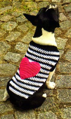 Gabriela delicacies crocheted: Pet Clothing