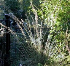 List of texas drought resistant plants